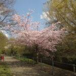 Frühling an der Aa